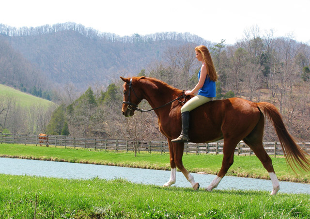 Exploring Appalachia on horseback