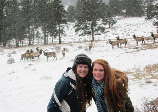 My sister and I stumbled upon a herd of elk here in Colorado, in Estes Park.