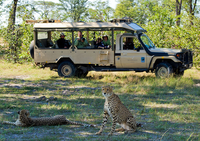 It is not too often that you get a picture of your group in a safari vehicle, but we were lucky to have a professional photographer nearby who was able to capture our family observing two cheetah. We watched this pair for almost two hours. My son was thrilled since he had spent several weeks researching cheetah in school and got to spend so much quality time with them. We even got to watch a cheetah hunt a spring hare, but it got away!