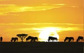 The Great Tanzania Migration Safari
