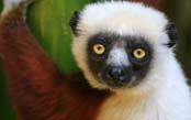 Madagascar Wildlife Adventure