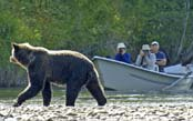 Grizzlies & Wildlife of British Columbia