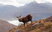 Scotland's Wild Highlands & Islands