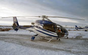 See polar bears from the sky in one of NHA's helicopter tours.