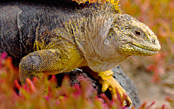 Ultimate Galapagos Adventure - NEW TRIP!