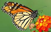 Monarch Butterfly Photo Adventure