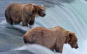 Ultimate Alaska Wildlife Photo Safari
