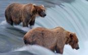 Ultimate Alaska Wildlife Photo Safari