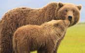Ultimate Grizzlies: Kodiak to Katmai Photo Tour