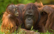 The Natural Wonders of Borneo