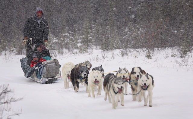 Sled Dog Adventure