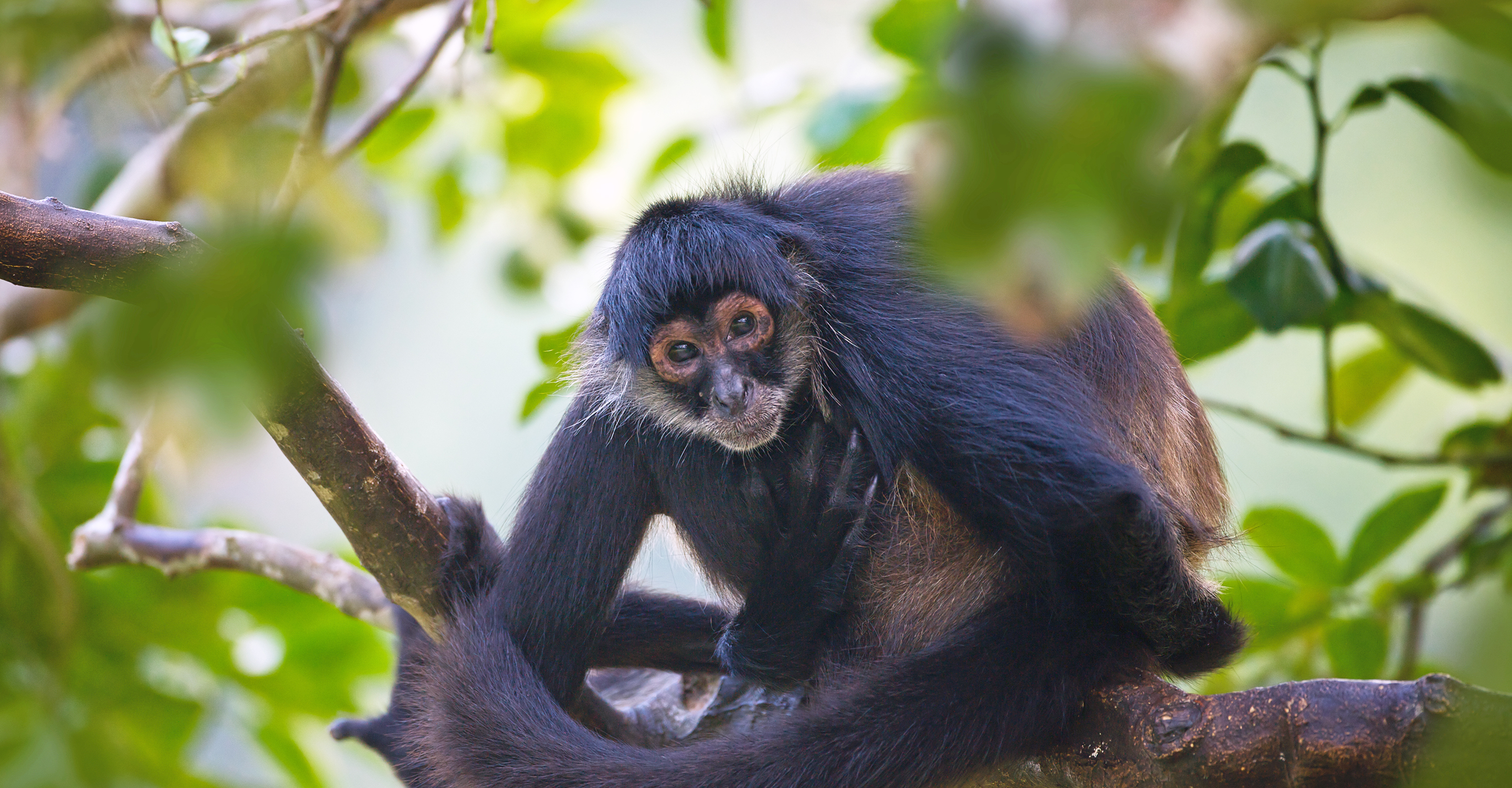 Ultimate Belize Nature Safari