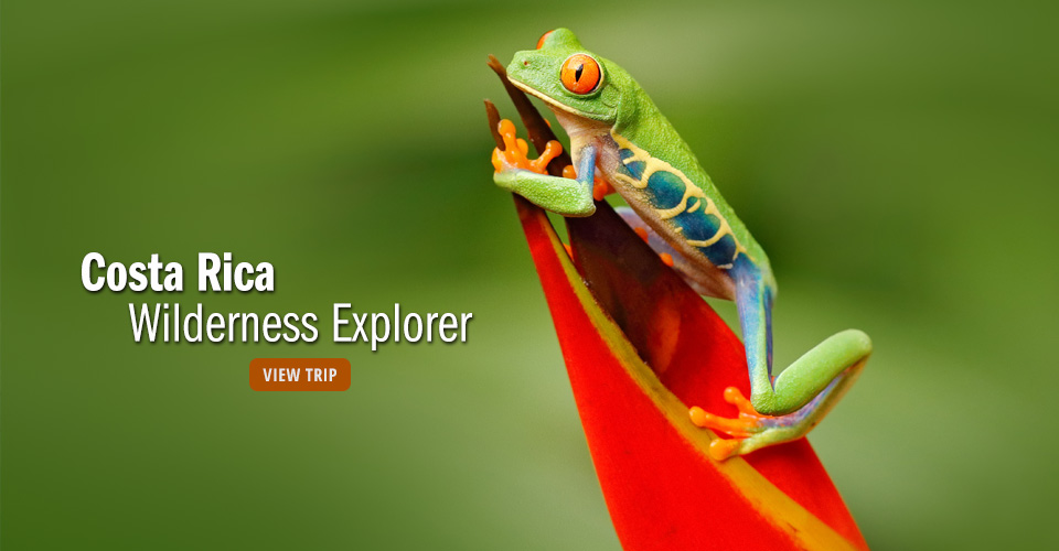 Red-eyed tree frog, Tiskita Private Biological Reserve, Costa Rica