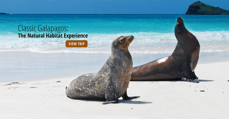 Galapagos sea lions, Santiago, Galapagos Islands