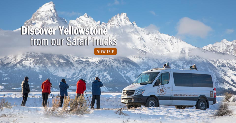 North American Safari Truck, Grand Teton National Park, Wyoming
