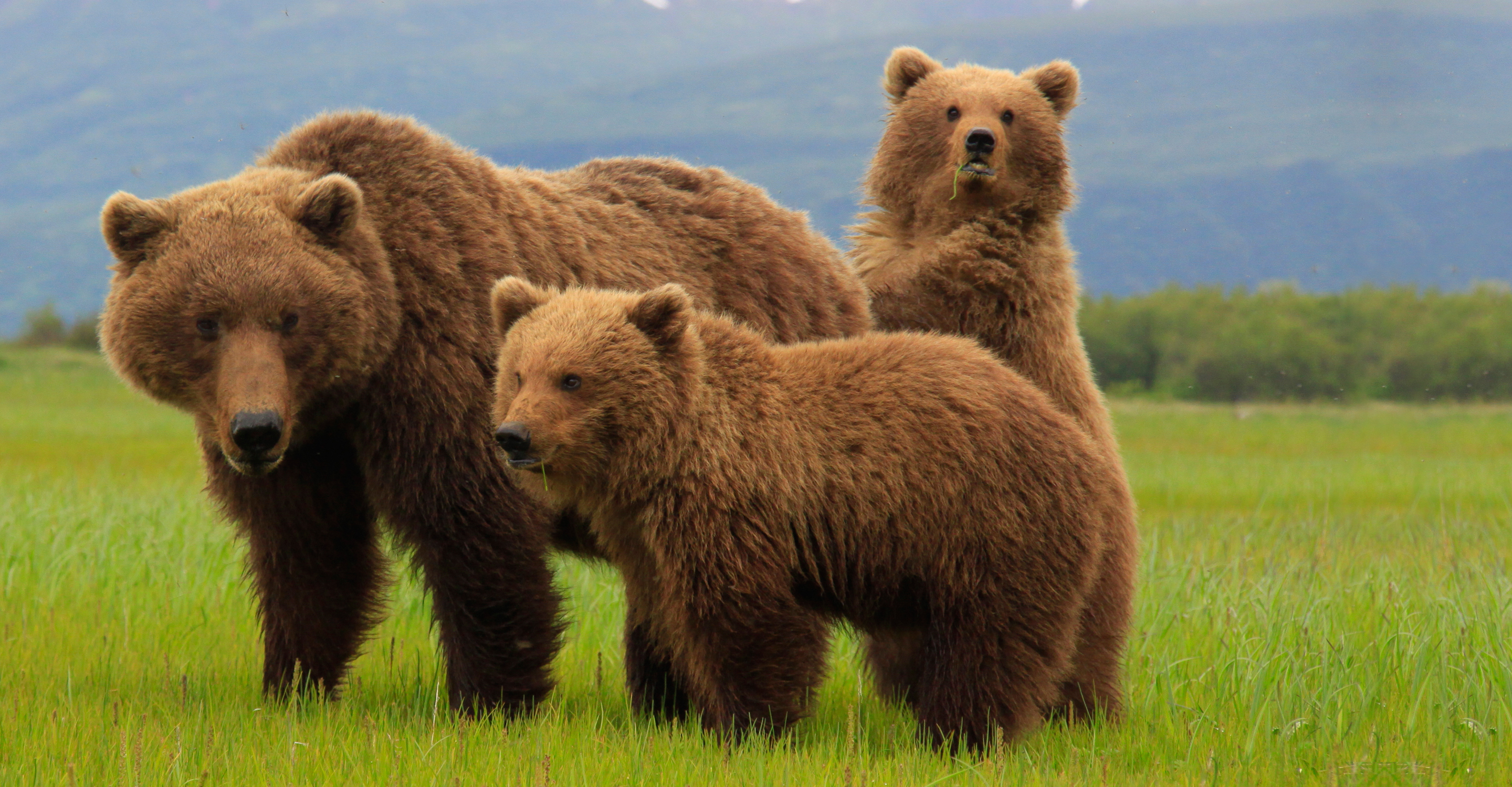 Grizzlies of Katmai: A Photo Pro Expedition