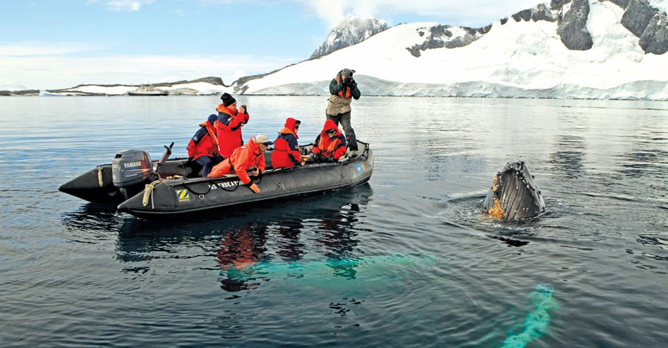 Whale watching, Yalour Islands, Antarctica