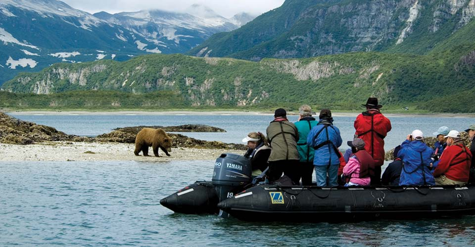 Grizzly bear, Geographic Harbor, Alaska