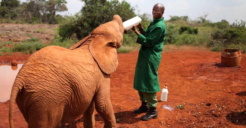 Daphne Sheldrick Elephant Orphanage, Nairobi, Kenya