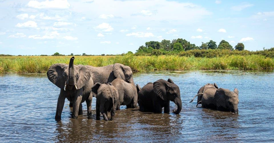 Elephant, Linyanti Private Reserve, Botswana