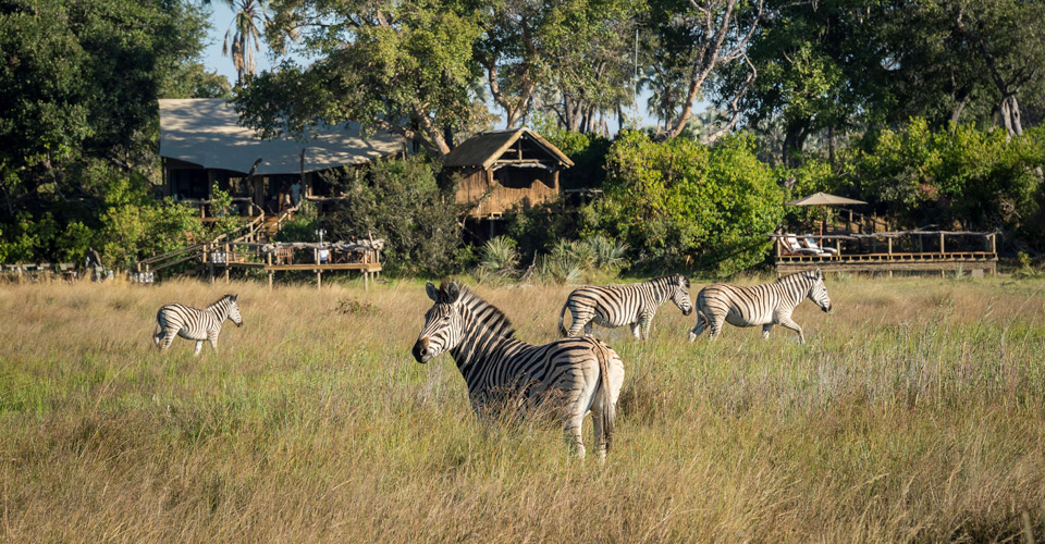 Zebra, Little Tubu, Hunda Island, Botswana