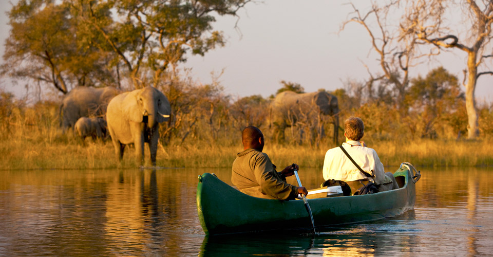 African Elephant, Selinda Spillway, Selinda Private Reserve, Botswana