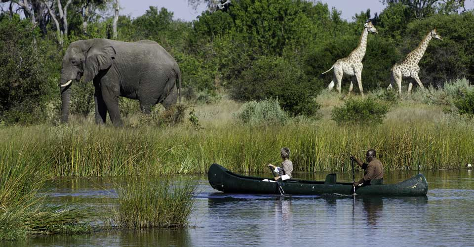 African elephant and Angolan giraffe, Savuti Channel, Botswana