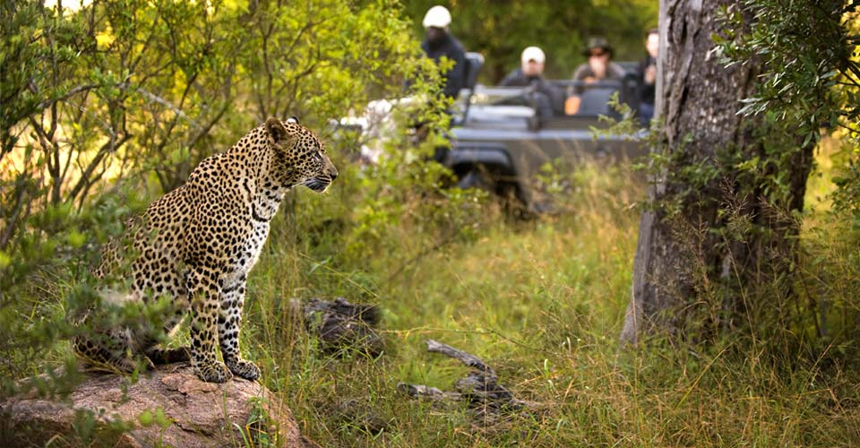 Southern Africa Wildlife Odyssey—Custom Safari