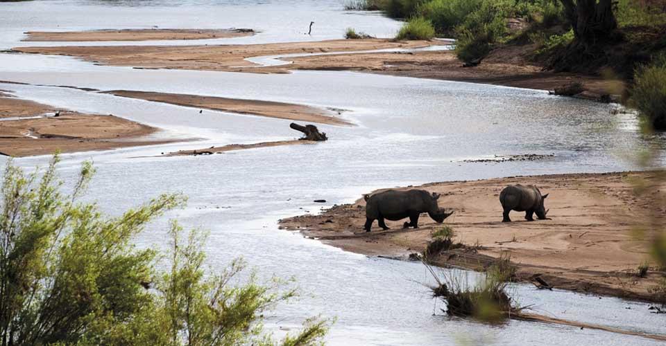 White rhino, Sabi Sand Game Reserve, South Africa