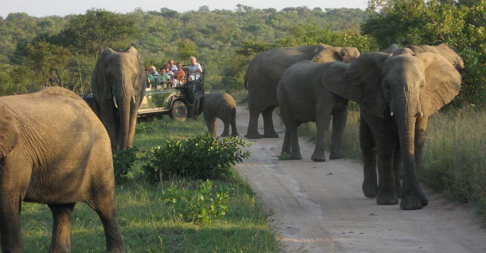 African elephants, Greater Kruger Park, South Africa
