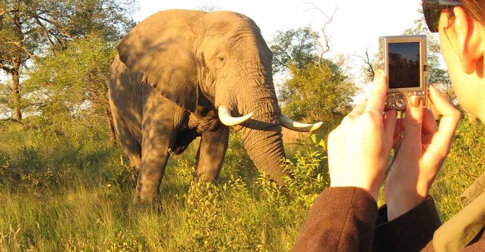 African elephant, Greater Kruger Park, South Africa