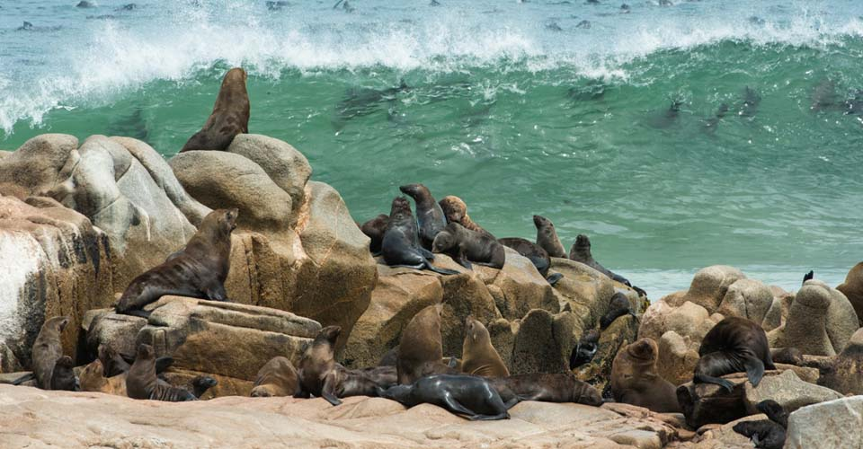 Cape fur seals, Skeleton Coast National Park, Namibia