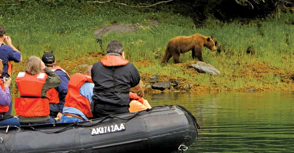 Brown Bear, Kelp Bay, Baranof Island, Tongass National Forest, Southeast Alaska