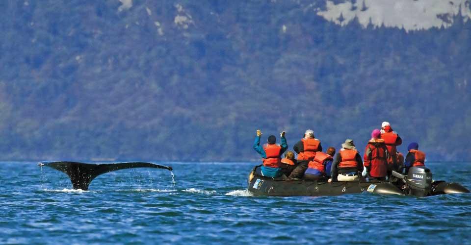 Humpback whale tail, Alaska