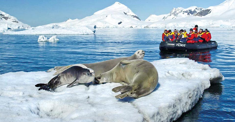 Weddell seals, Antarctic Peninsula, Antarctica