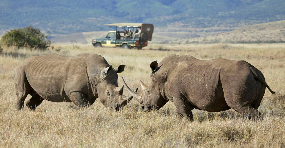 White rhino, Lewa Private Conservancy, Kenya