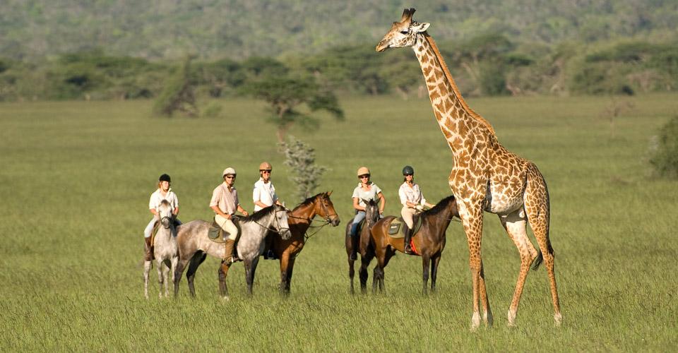 Maasai giraffe, Chyulu Hills National Park, Kenya