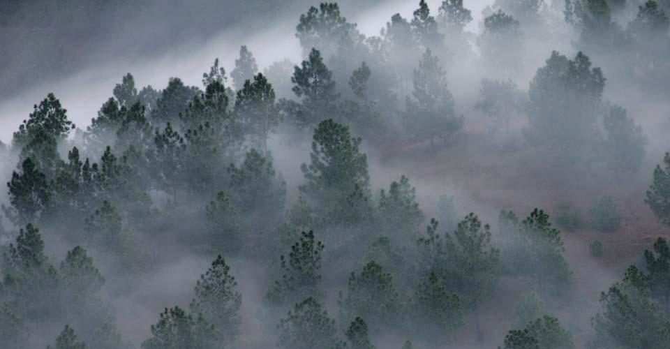Punakha Valley, Punakha, Bhutan