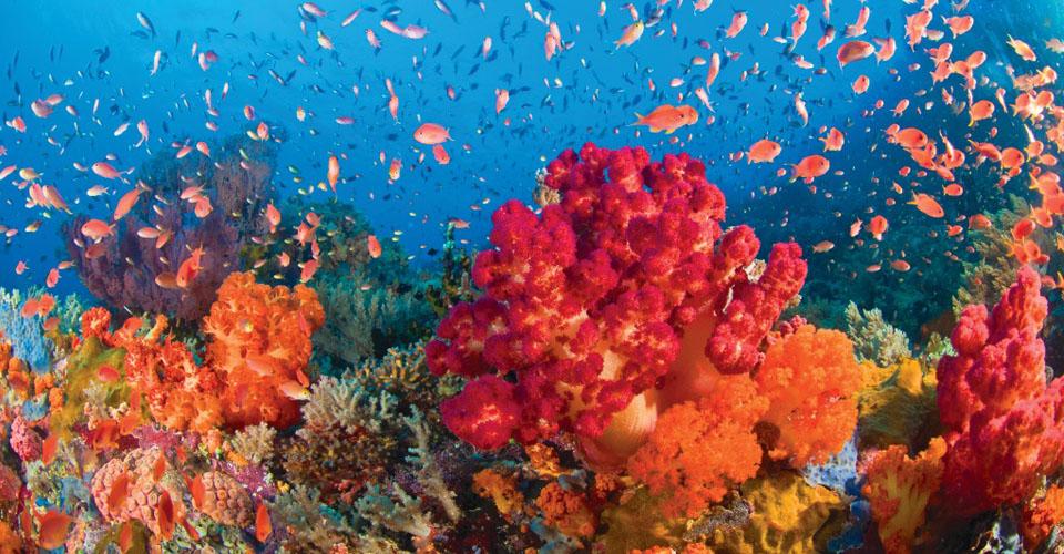 Tropical coral ecosystem, Anambas Archipelago