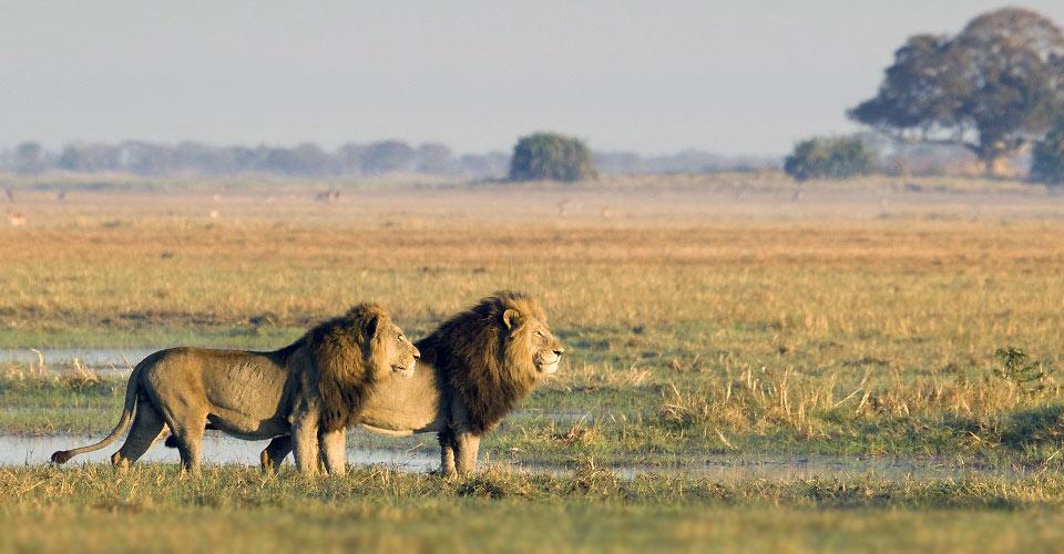 African Safaris & Adventure Travel | Natural Habitat Adventures
