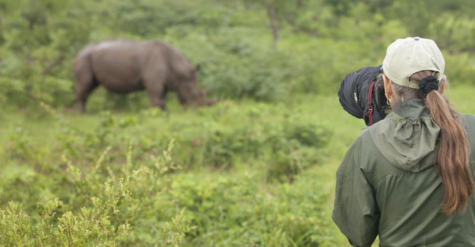 White rhino, Mosi-oa-Tunya National Park, Zambia