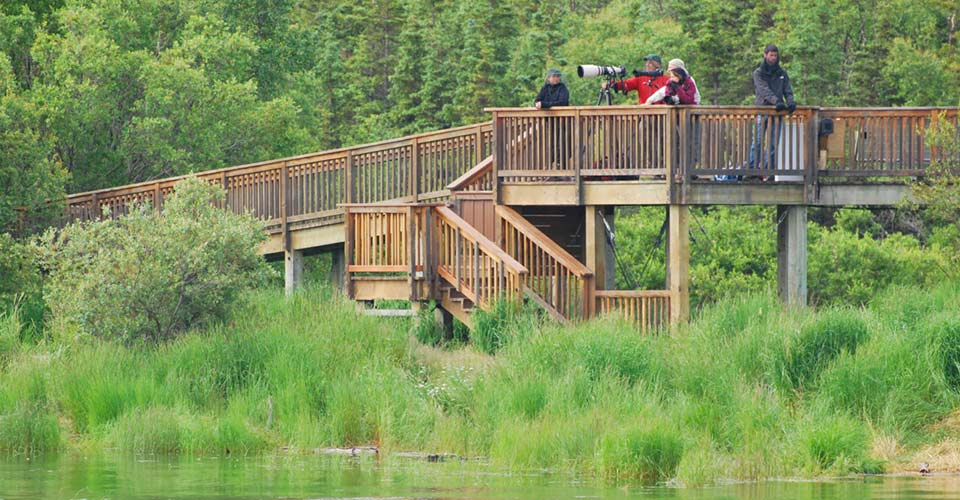Brown bear viewing platform, Katmai National Park, Alaska