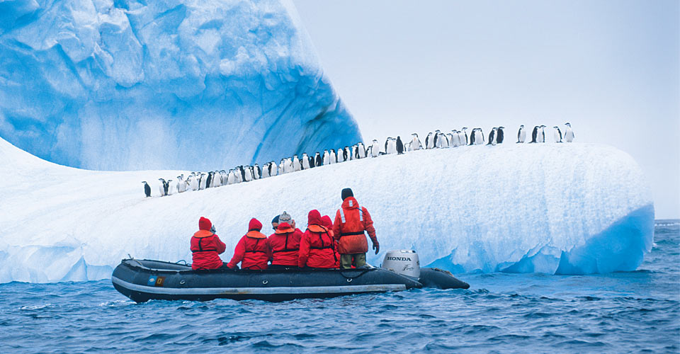 Chinstrap penguins, Antarctica
