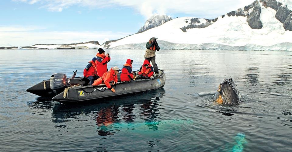 Humpback whale, Yalour Islands, Antarctica