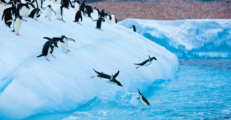 Adelie penguins, Antarctic Peninsula, Antarctica