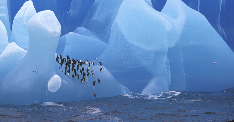 Gentoo penguins, Antarctic Peninsula, Antarctica