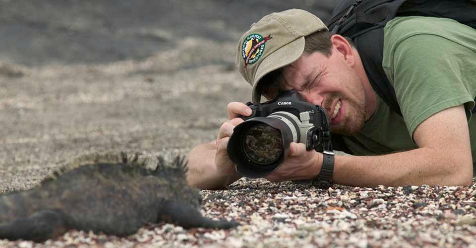 Marine iguana, Fernandina, Galapagos Islands, Ecuador