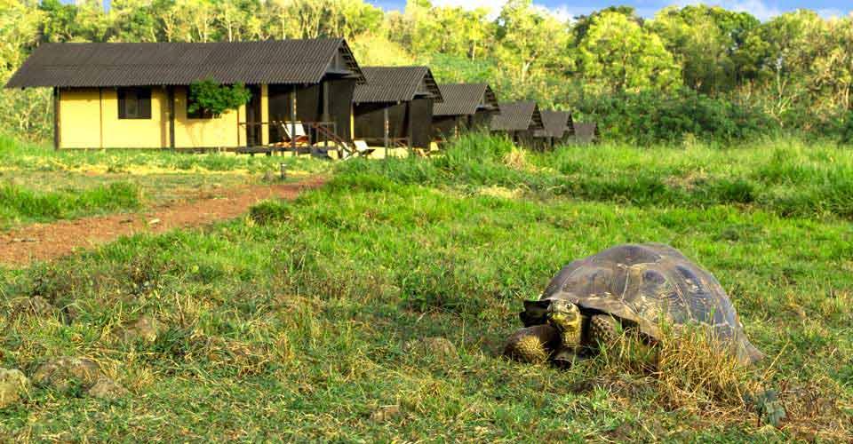 Natural Habitat's Tortoise Camp, Santa Cruz, Galapagos Islands, Ecuador