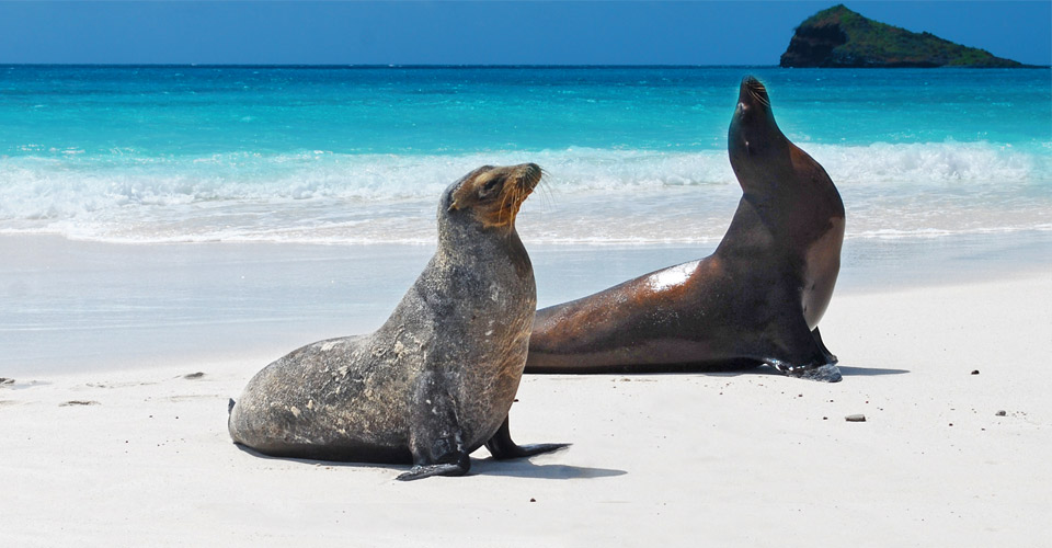 Classic Galapagos: The Natural Habitat Experience