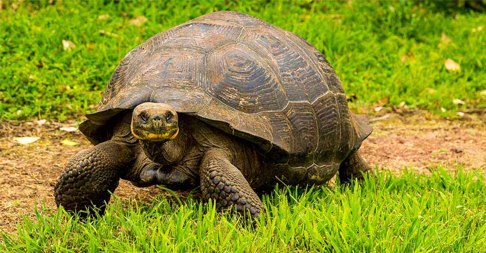 Natural Habitat S Tortoise Camp